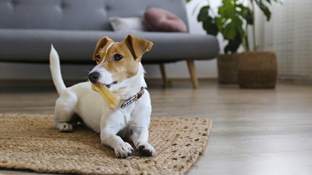casa a misura di cucciolo